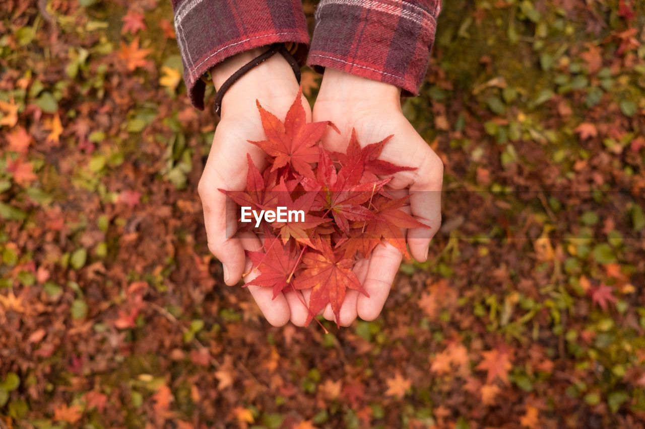 Cropped Image Of Hand Holding Orange Leaves During Autumn