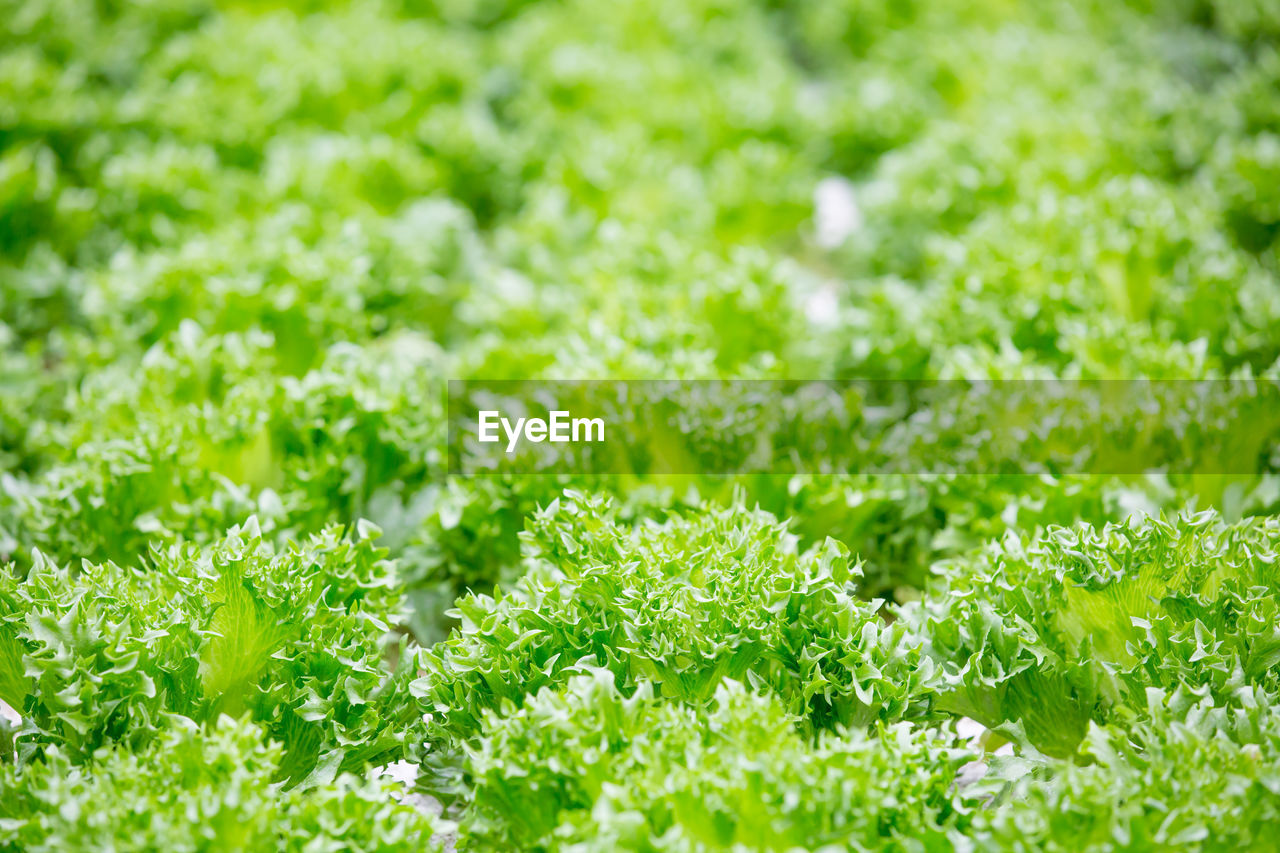 grass, green color, nature, selective focus, freshness, growth, plant, field, no people, beauty in nature, backgrounds, outdoors, leaf, day, flower, close-up, food