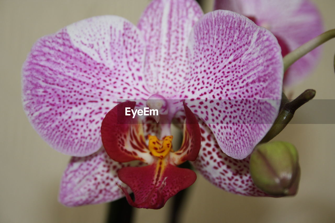 flower, petal, flower head, fragility, beauty in nature, growth, freshness, close-up, nature, plant, pollen, day, no people, pink color, blooming, outdoors, passion flower