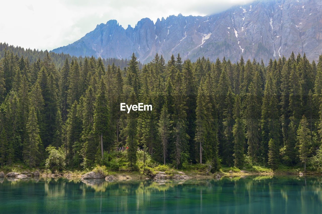 tree, mountain, scenics - nature, beauty in nature, plant, water, tranquility, tranquil scene, no people, nature, non-urban scene, sky, land, day, growth, lake, environment, pine tree, mountain range, coniferous tree, mountain peak