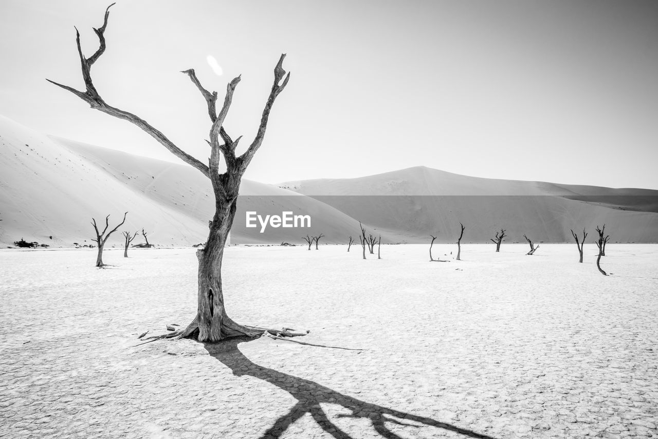 Bare Tree On Sand Against Clear Sky
