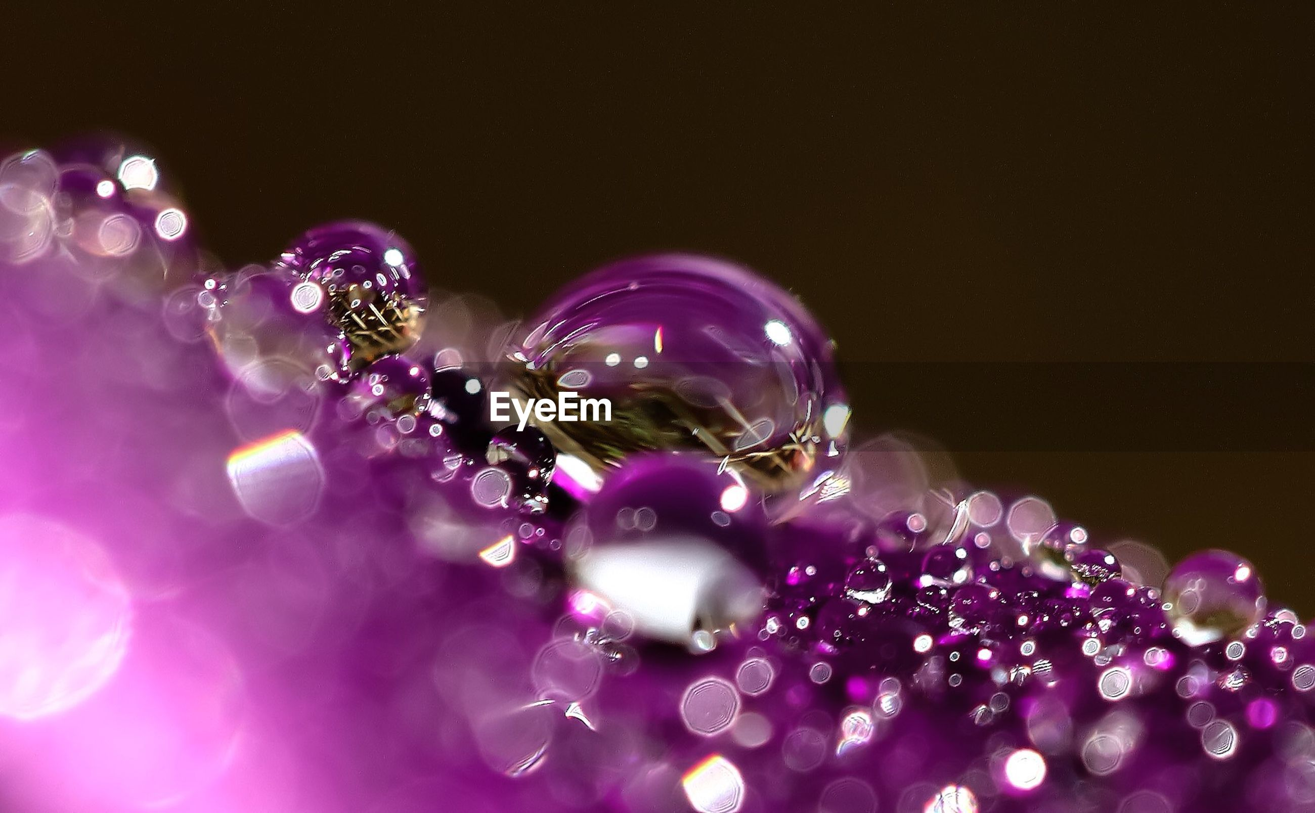 close-up, studio shot, shiny, purple, water, copy space, fragility, bubble, selective focus, no people, drop, multi colored, mid-air, celebration, transparent, freshness, purity, black background, reflection, beauty in nature