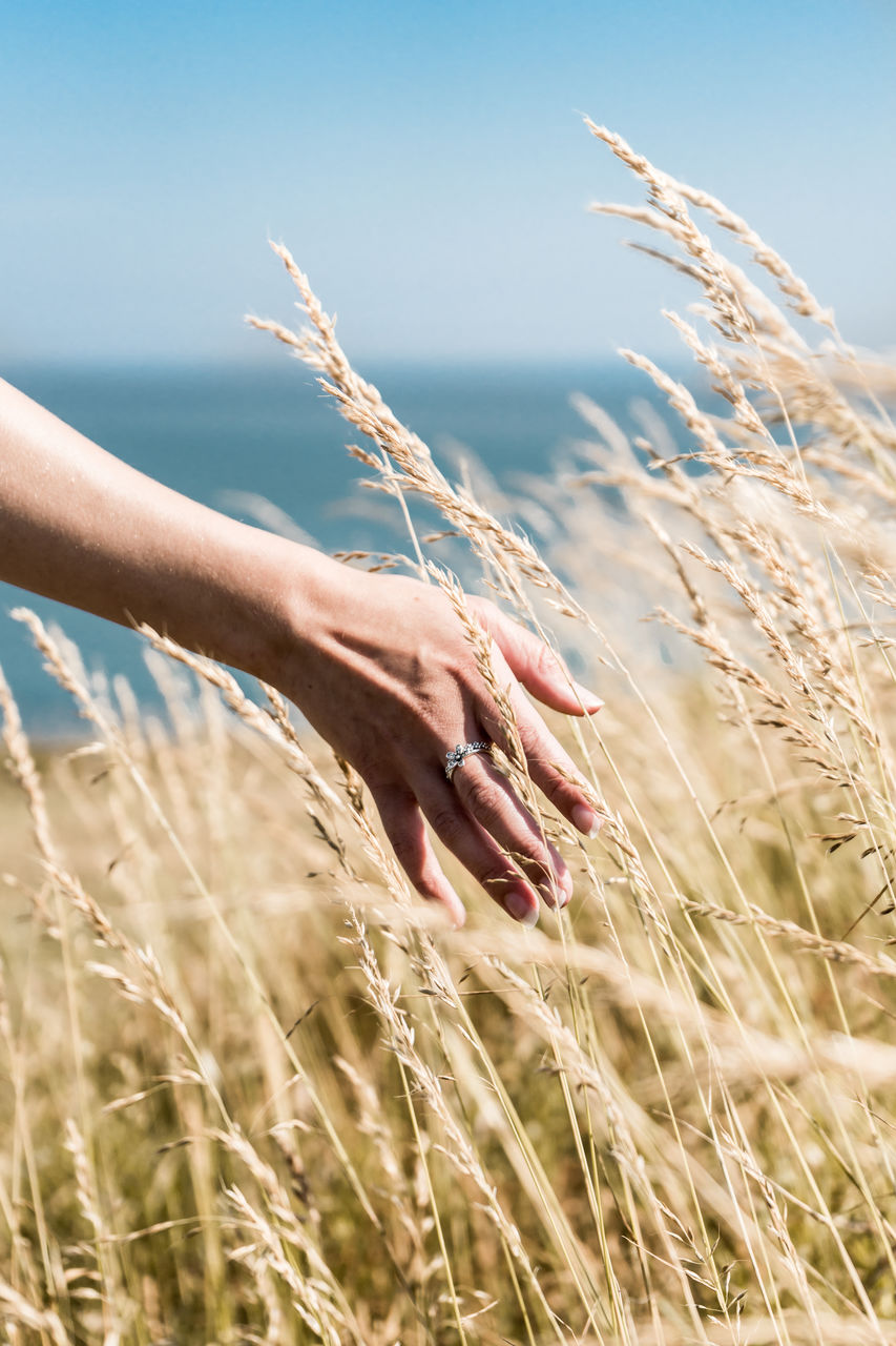 Cropped Hand Of Woman Touching Plants Growing On Field