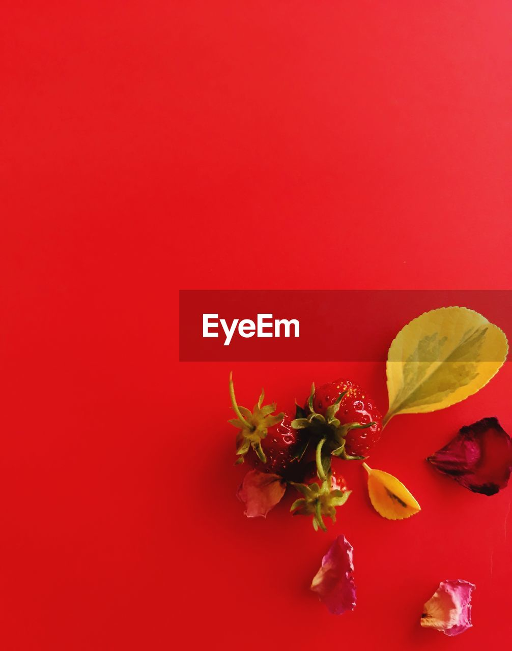 freshness, colored background, red, flower, flowering plant, indoors, beauty in nature, no people, close-up, fruit, copy space, studio shot, still life, food, vulnerability, food and drink, red background, petal, fragility, plant, flower head