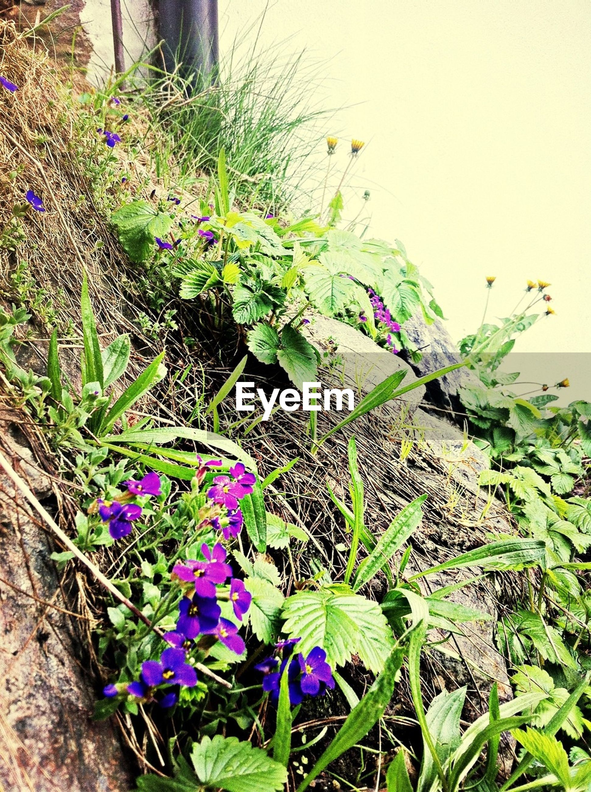 flower, plant, growth, freshness, leaf, purple, fragility, beauty in nature, green color, nature, blooming, field, high angle view, growing, petal, flower head, close-up, day, green, botany
