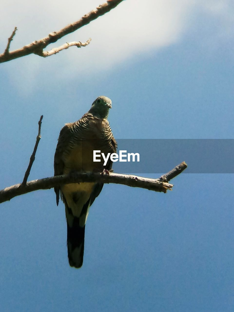 bird, vertebrate, animals in the wild, animal, animal themes, perching, animal wildlife, one animal, sky, low angle view, branch, nature, tree, no people, day, plant, clear sky, outdoors, twig, blue, eagle