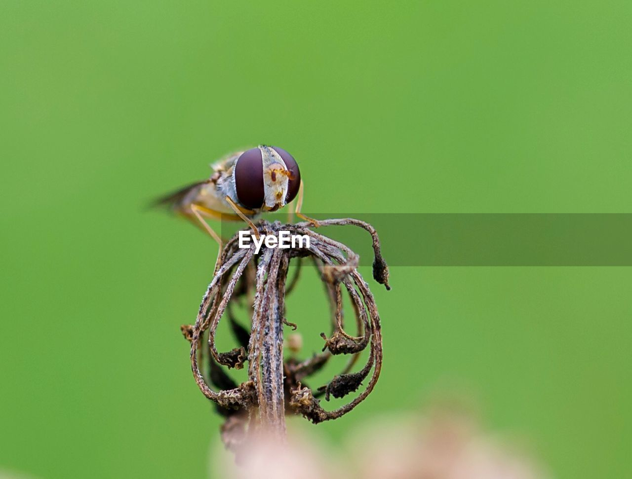 invertebrate, one animal, animal themes, insect, animal, animal wildlife, animals in the wild, close-up, focus on foreground, no people, arachnid, spider, arthropod, nature, copy space, zoology, day, plant, green color, outdoors