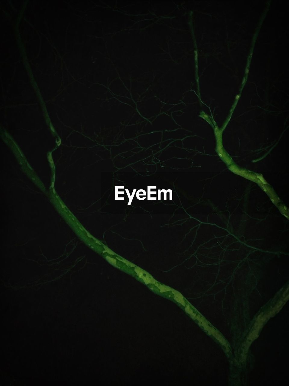 black background, green color, studio shot, close-up, leaf, plant, nature, no people, full frame, growth, beauty in nature, night, branch, fragility, freshness, outdoors