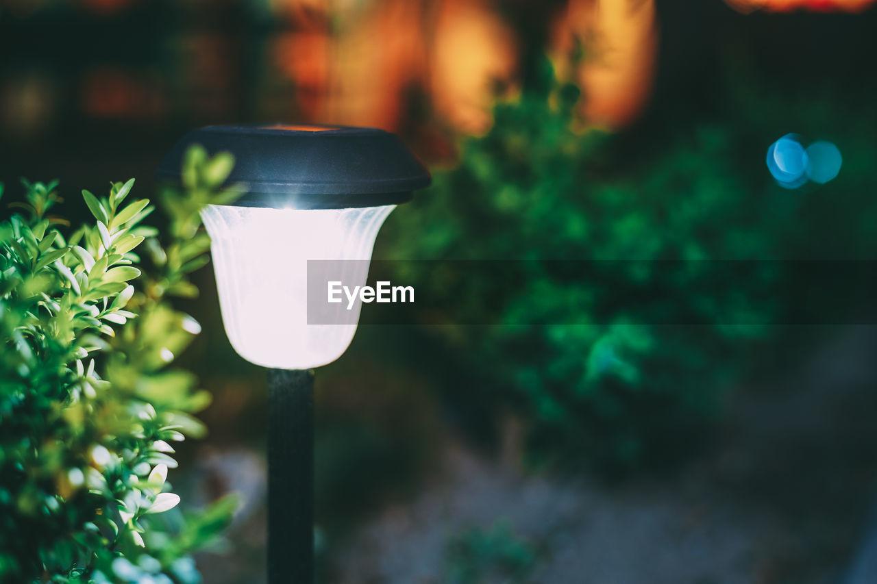 CLOSE-UP OF ILLUMINATED LIGHT BULB AGAINST PLANTS