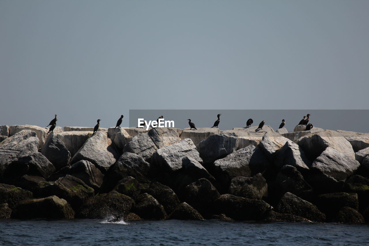 Cormorants perching on rocks in sea against sky