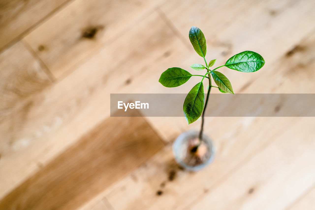 green color, leaf, plant part, plant, growth, no people, table, close-up, nature, wood - material, indoors, high angle view, selective focus, fragility, vulnerability, still life, herb, potted plant, mint leaf - culinary, beauty in nature, small, leaves
