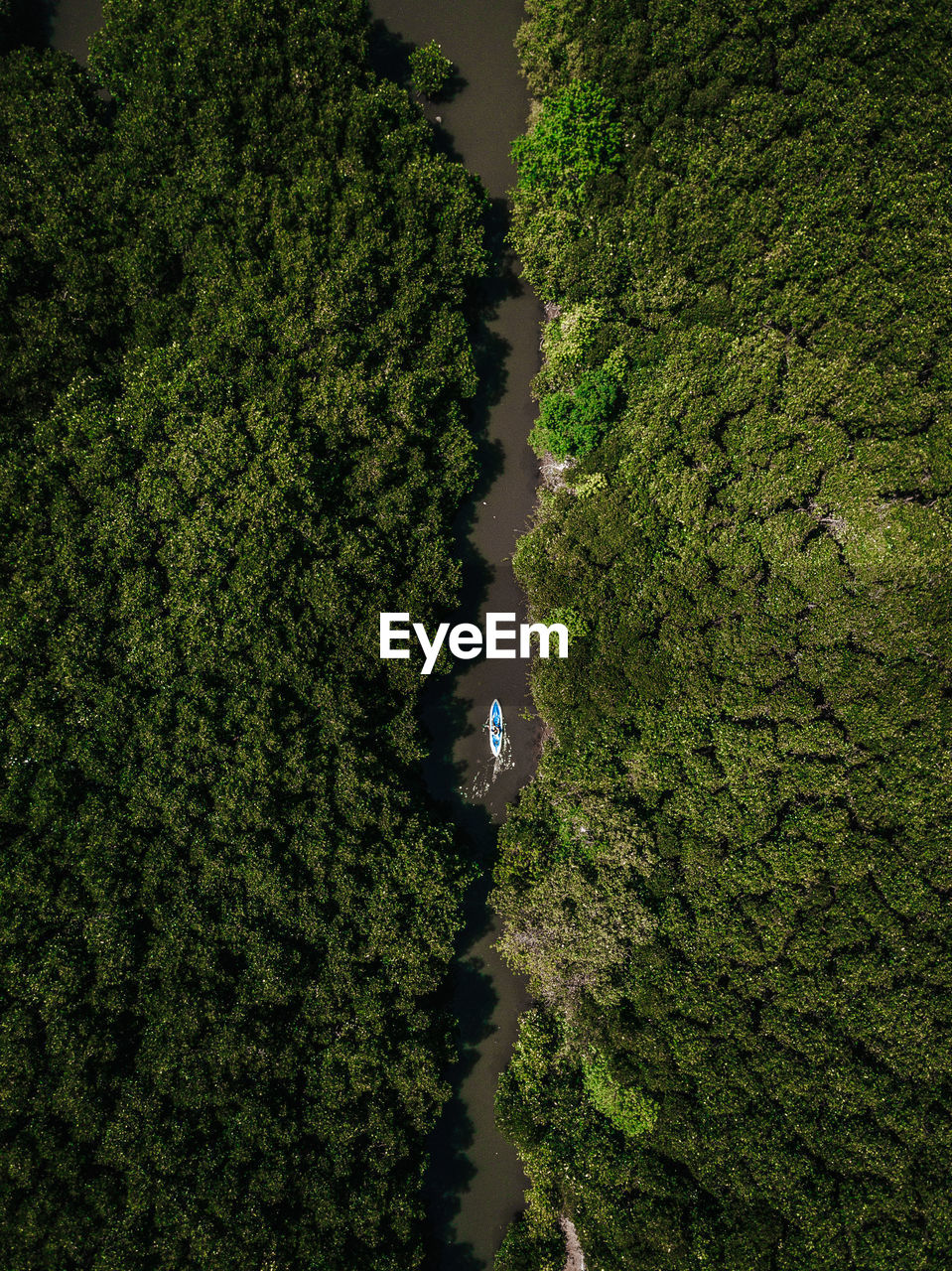 Aerial view of river amidst trees in forest