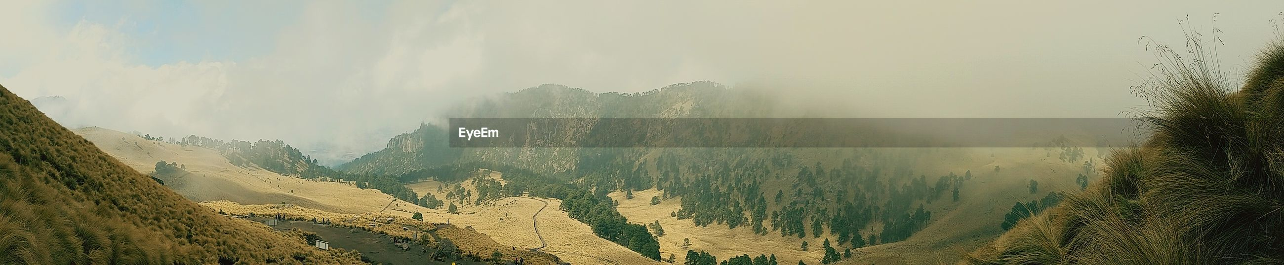 fog, scenics - nature, environment, tree, beauty in nature, mountain, tranquility, tranquil scene, landscape, sky, plant, nature, non-urban scene, cloud - sky, land, no people, mountain range, day, idyllic, outdoors, coniferous tree, pine tree