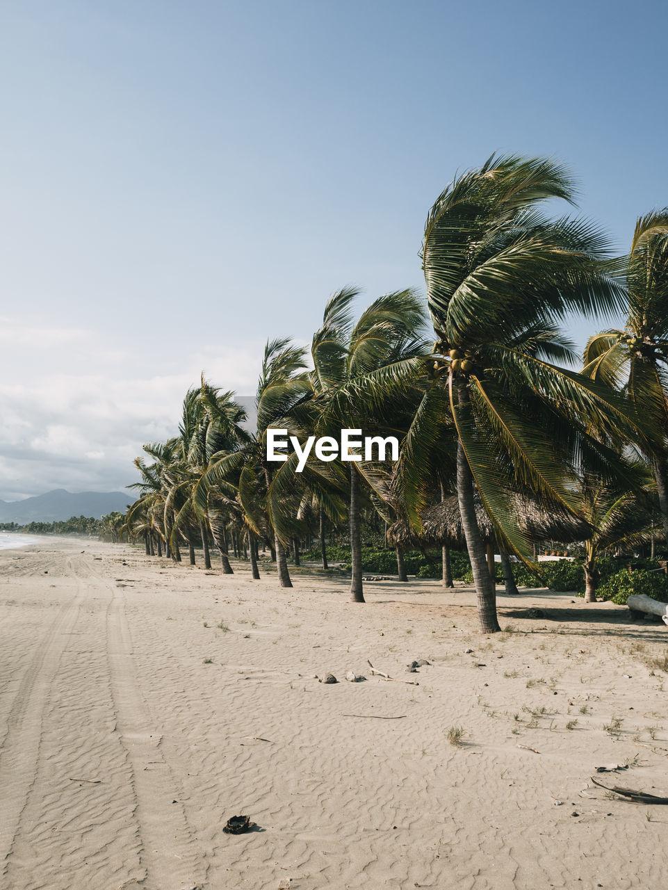 PALM TREES ON SAND AGAINST SKY