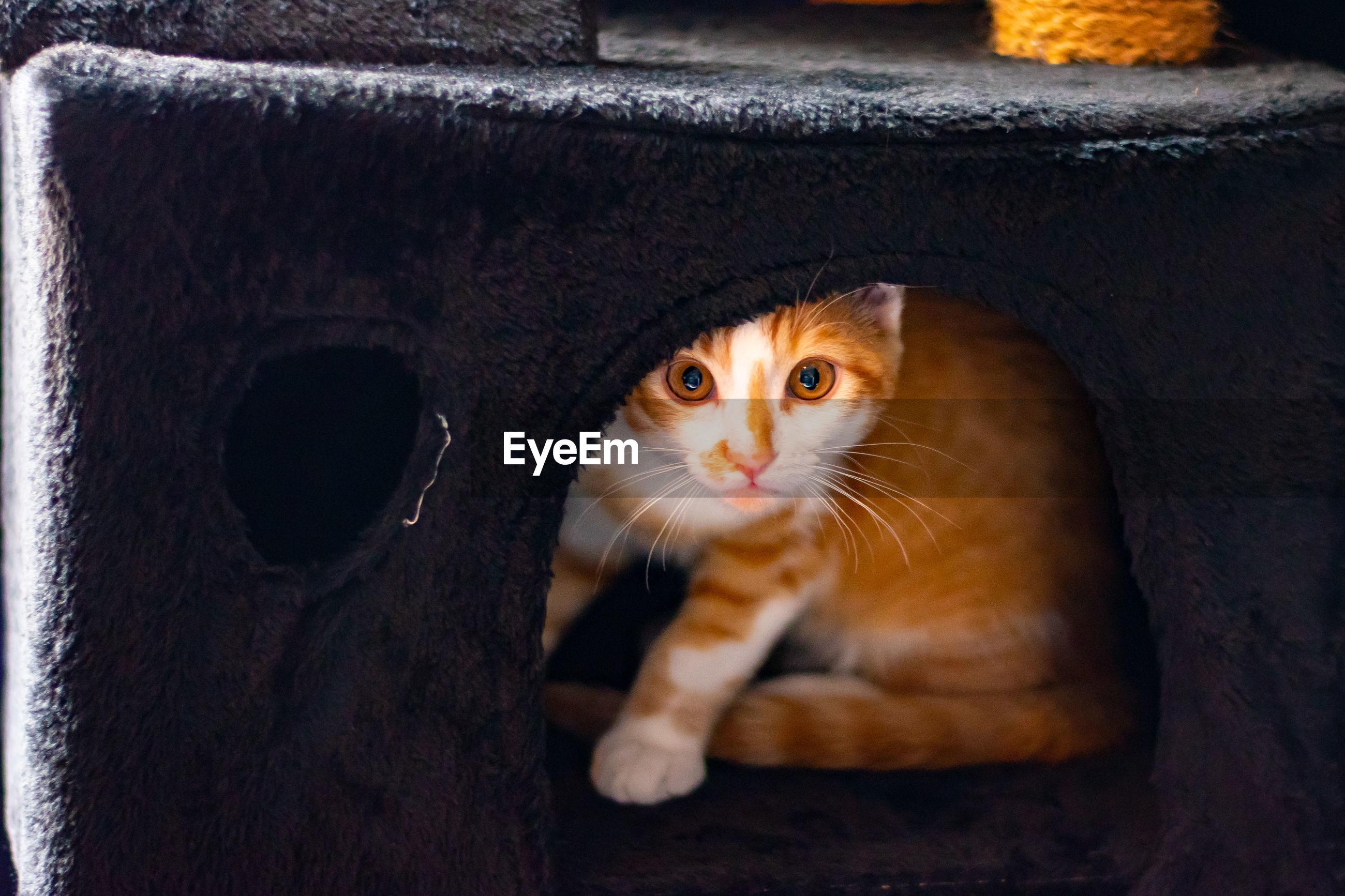 PORTRAIT OF KITTEN BY CAT