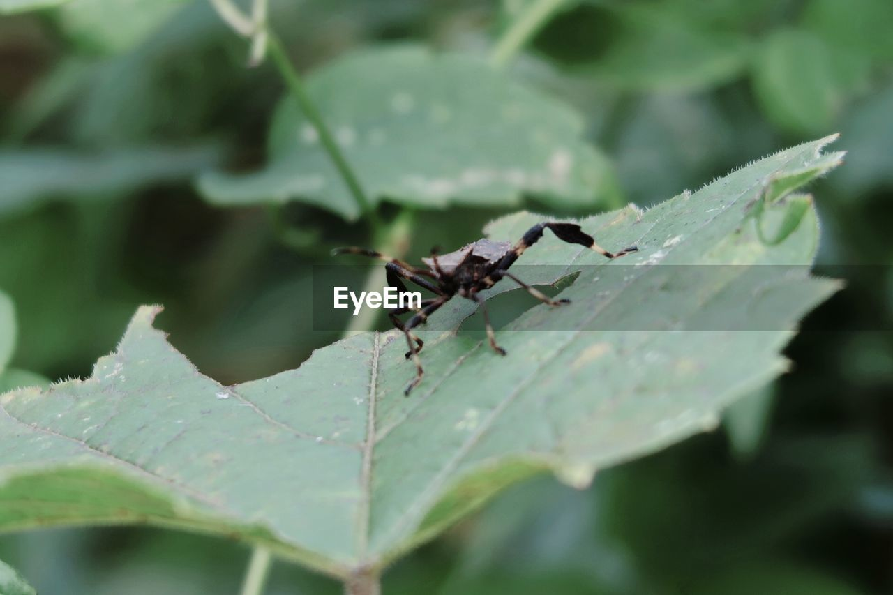 plant part, leaf, animal themes, insect, animals in the wild, invertebrate, animal wildlife, animal, one animal, green color, day, nature, close-up, plant, growth, no people, selective focus, focus on foreground, outdoors, beauty in nature