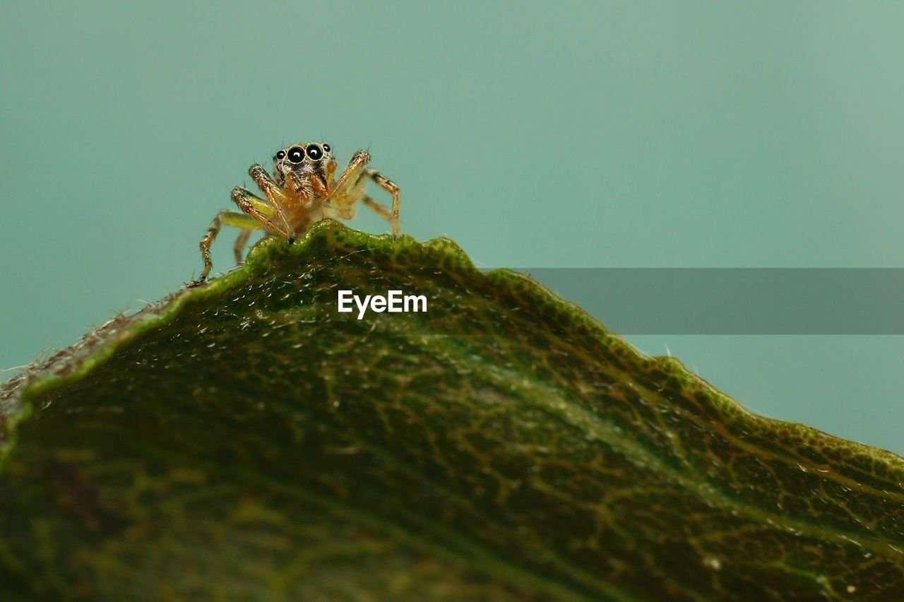 animals in the wild, animal wildlife, invertebrate, animal themes, animal, close-up, insect, one animal, green color, selective focus, nature, no people, day, plant part, spider, arthropod, zoology, leaf, plant, arachnid, outdoors