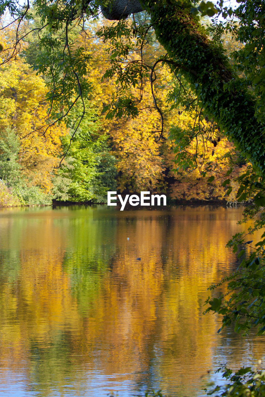 tree, lake, plant, water, reflection, autumn, beauty in nature, tranquility, scenics - nature, nature, no people, tranquil scene, growth, day, forest, change, land, outdoors, non-urban scene