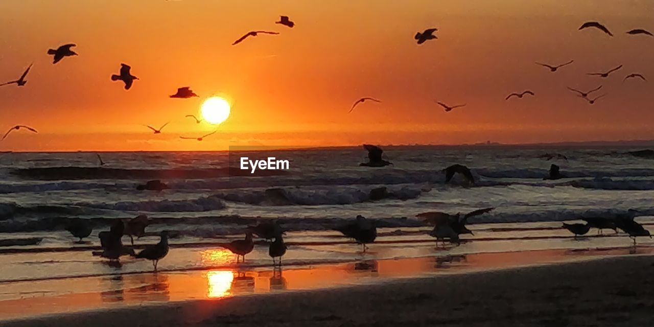 sunset, sky, sea, group of animals, orange color, bird, water, animals in the wild, beauty in nature, large group of animals, animal wildlife, vertebrate, animal, scenics - nature, animal themes, horizon over water, flying, silhouette, beach, flock of birds, sun, no people, seagull