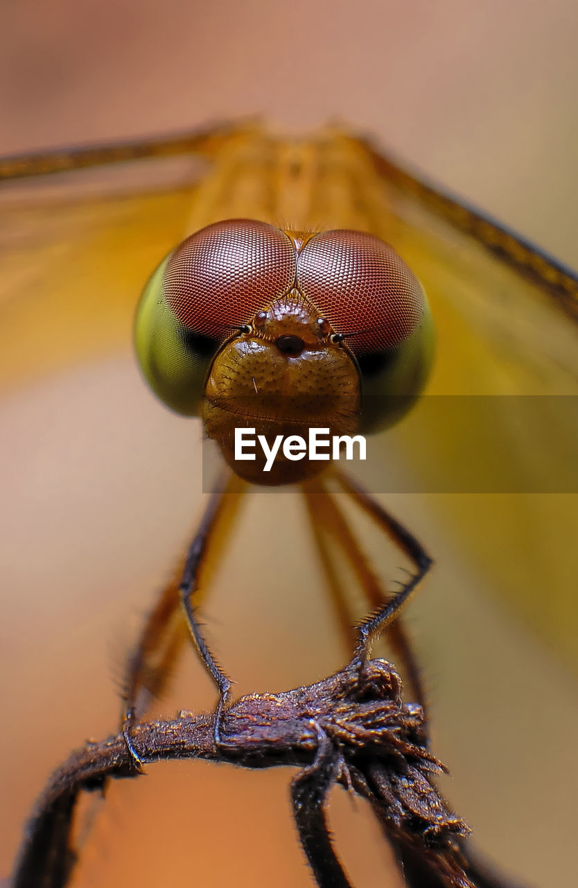close-up, invertebrate, animal themes, insect, animal, animals in the wild, no people, one animal, selective focus, focus on foreground, animal wildlife, day, outdoors, animal body part, nature, arthropod, extreme close-up, spider, arachnid, macro, animal eye