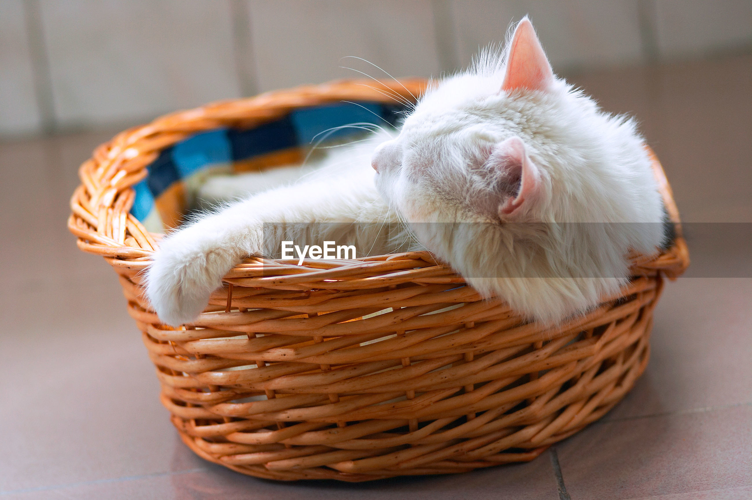 View of cat sleeping in basket