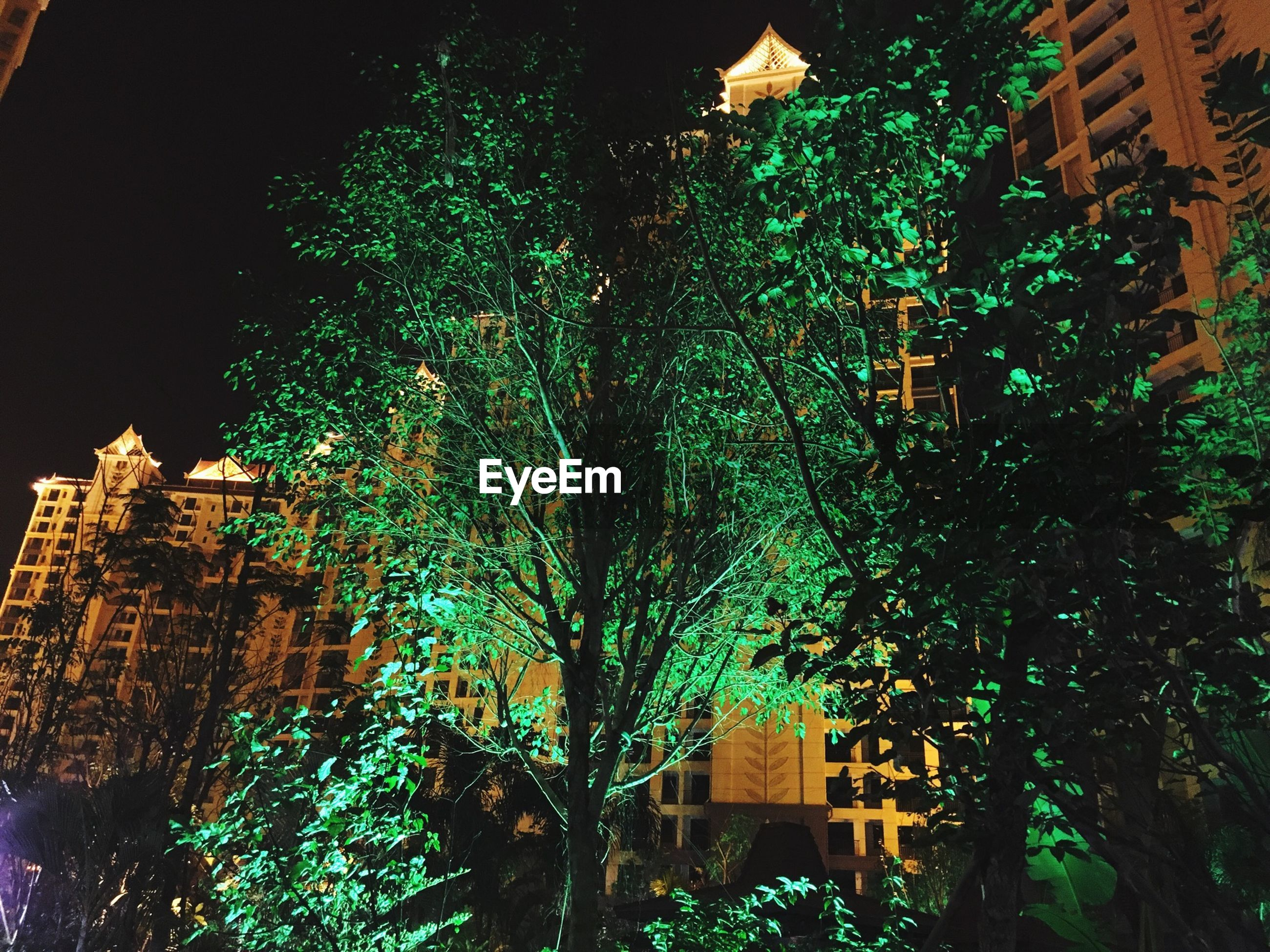 building exterior, architecture, built structure, low angle view, night, illuminated, tree, building, residential building, city, residential structure, window, branch, house, growth, outdoors, clear sky, no people, sky, tower
