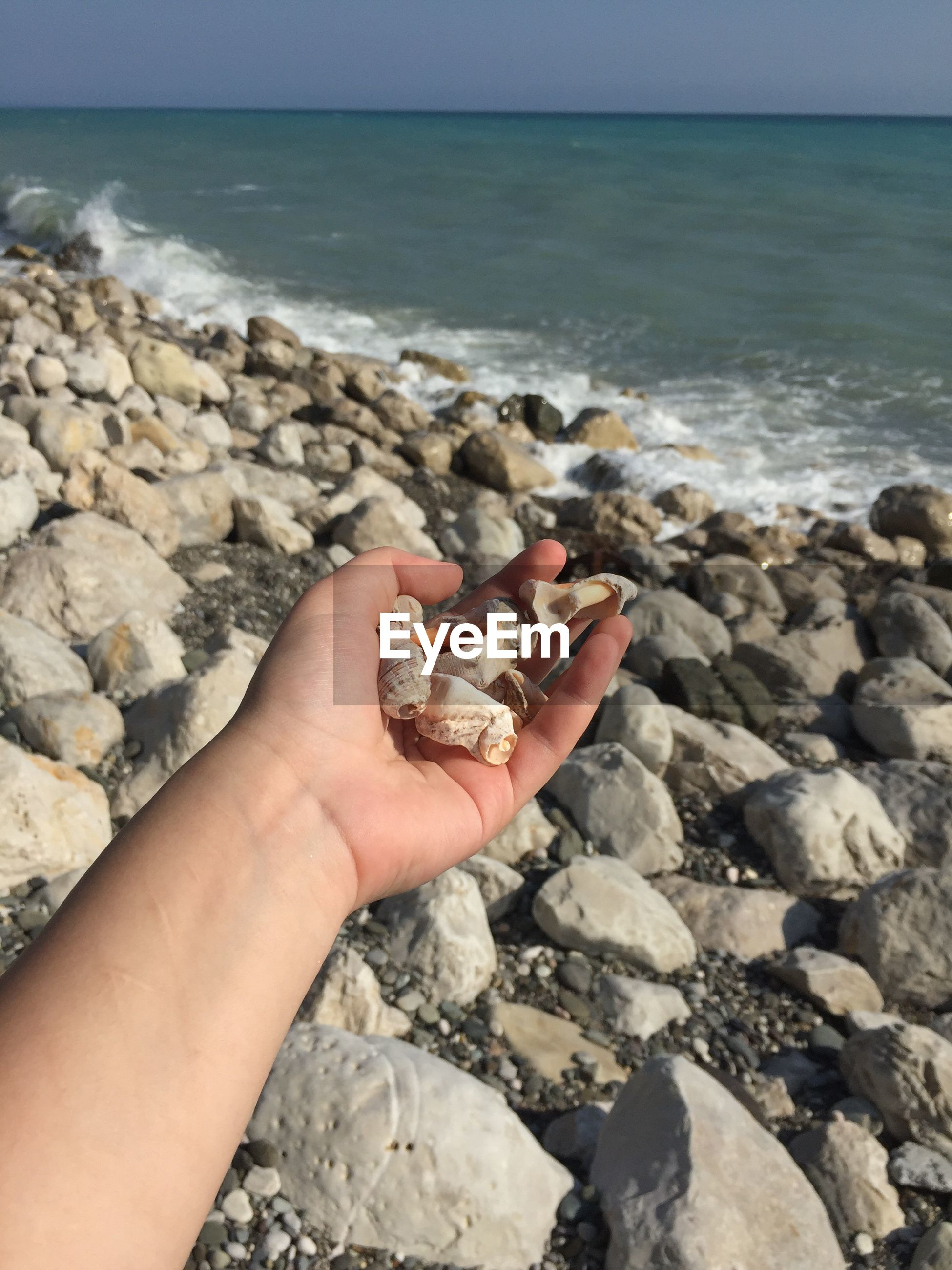 Cropped image of hand holding seashells at beach