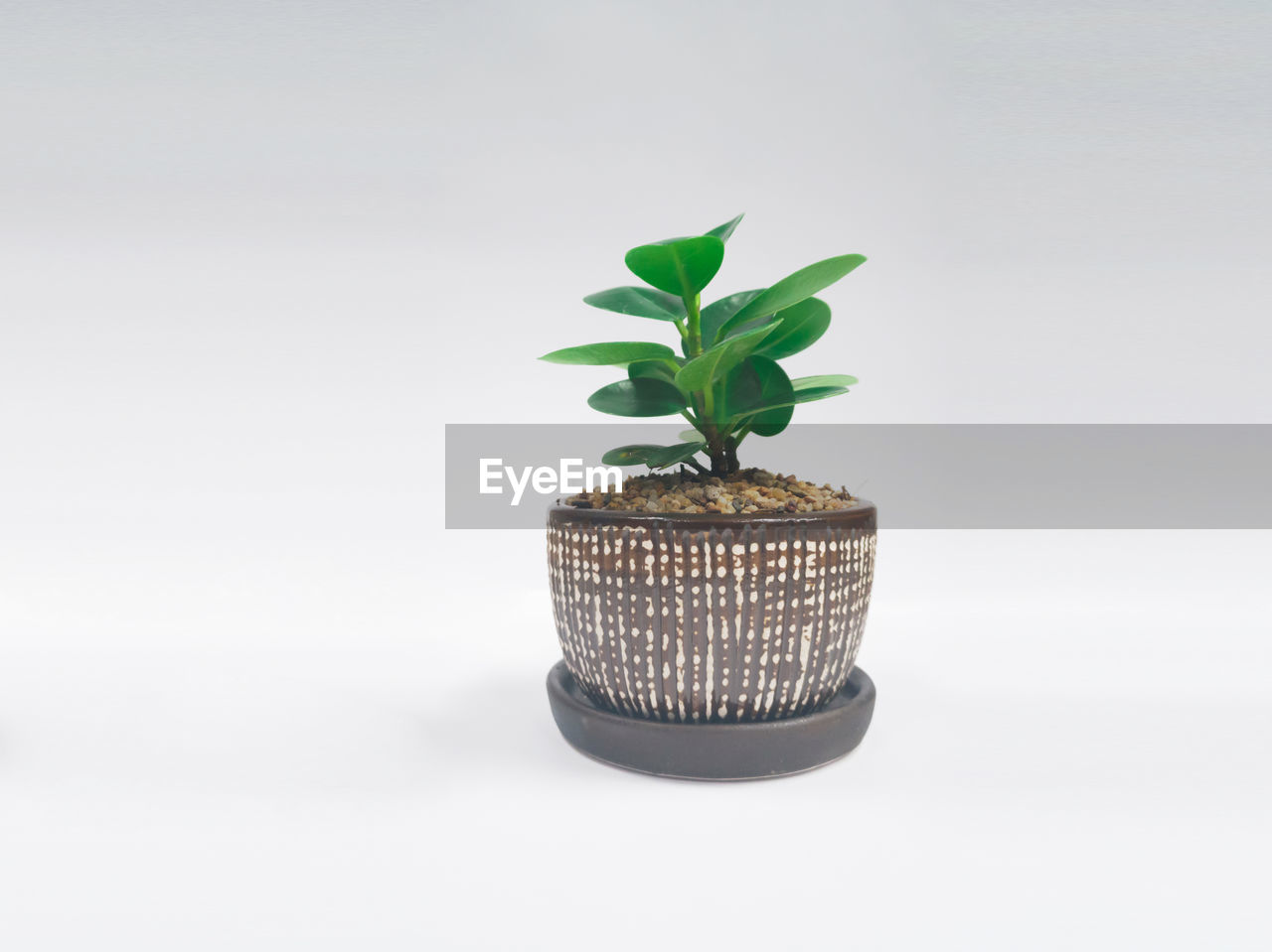 CLOSE-UP OF SMALL PLANT IN POT