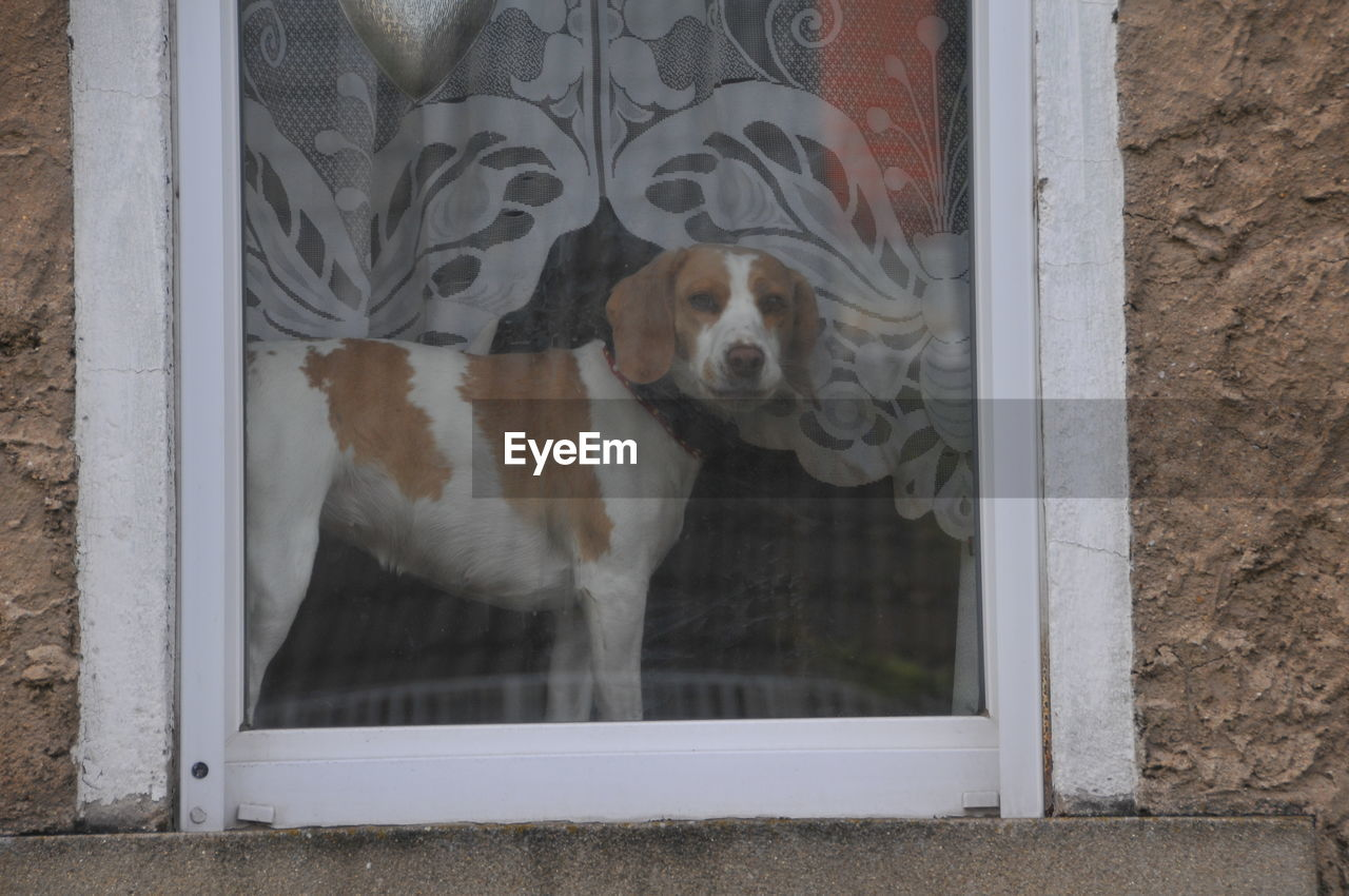 one animal, animal themes, animal, mammal, domestic, pets, domestic animals, dog, canine, vertebrate, window, no people, day, portrait, glass - material, transparent, looking at camera, indoors, door, entrance