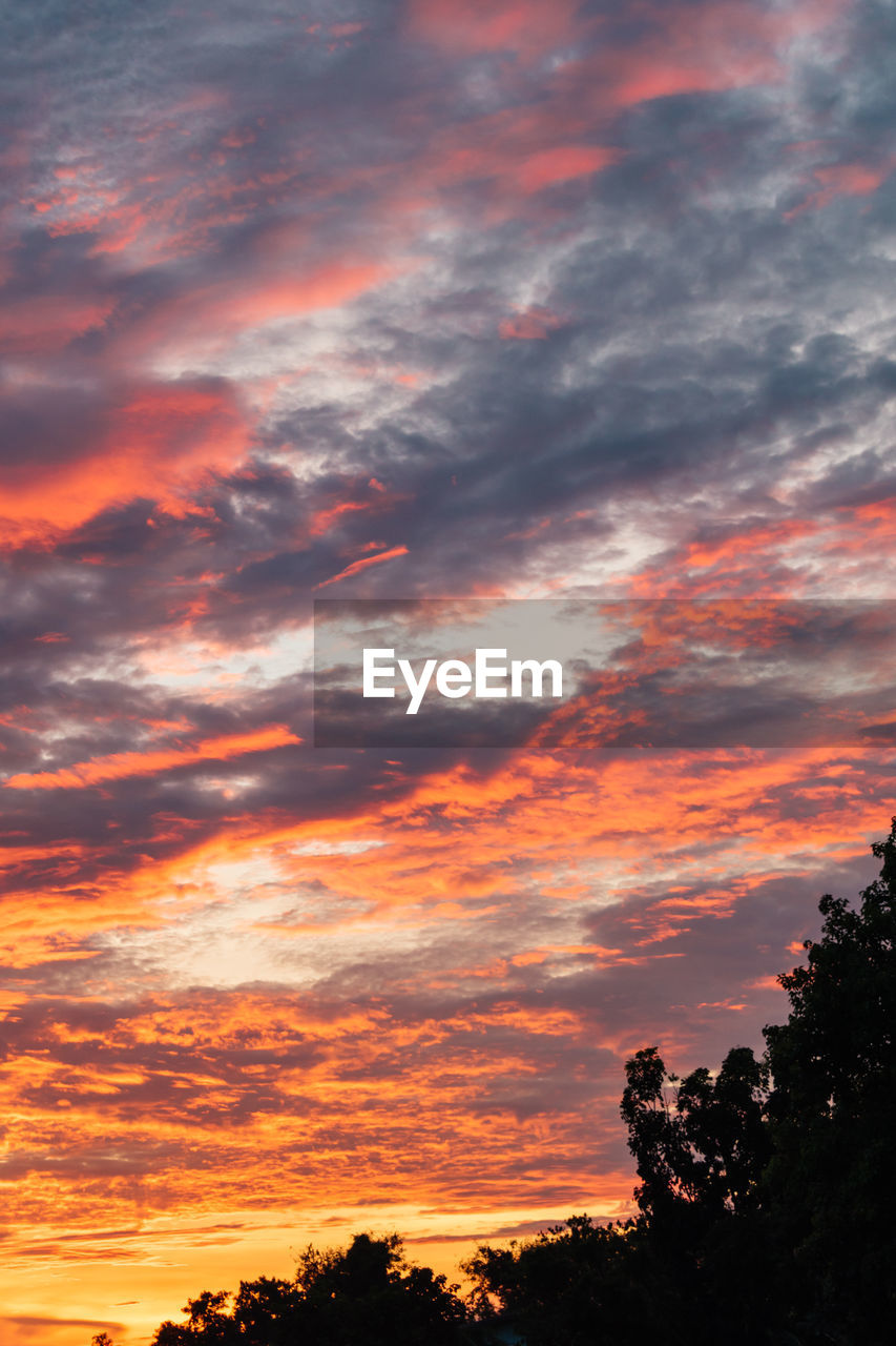 sky, cloud - sky, sunset, beauty in nature, scenics - nature, orange color, tranquility, tree, tranquil scene, silhouette, plant, no people, idyllic, nature, low angle view, dramatic sky, outdoors, non-urban scene, red, growth, romantic sky
