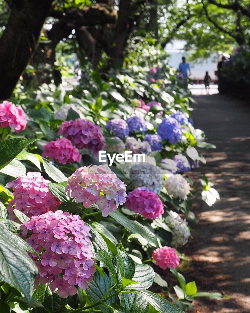 flower, growth, fragility, nature, beauty in nature, freshness, plant, no people, day, outdoors, petal, tree, pink color, park - man made space, blooming, springtime, close-up, flower head