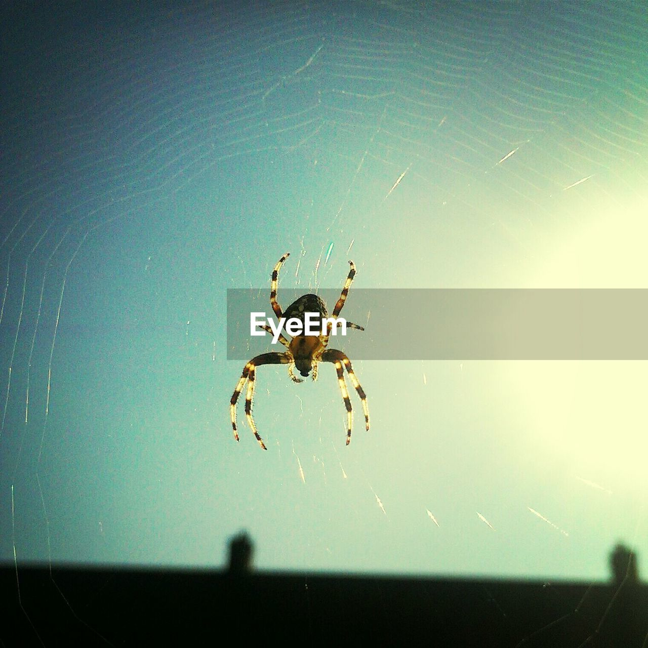 Close-Up Of Spider Against Clear Sky