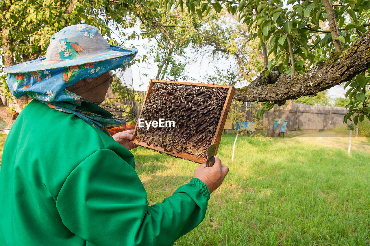 one person, green color, grass, real people, day, plant, men, tree, nature, field, adult, holding, beehive, apiculture, land, bee, incidental people, unrecognizable person, clothing, obscured face
