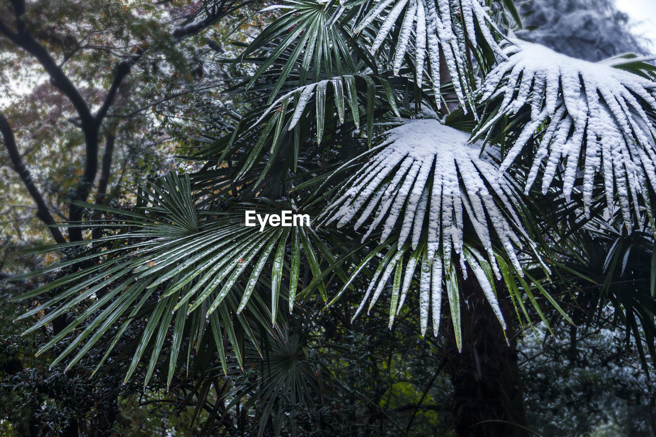 tree, nature, day, outdoors, growth, no people, palm tree, tranquility, beauty in nature, close-up, scenics