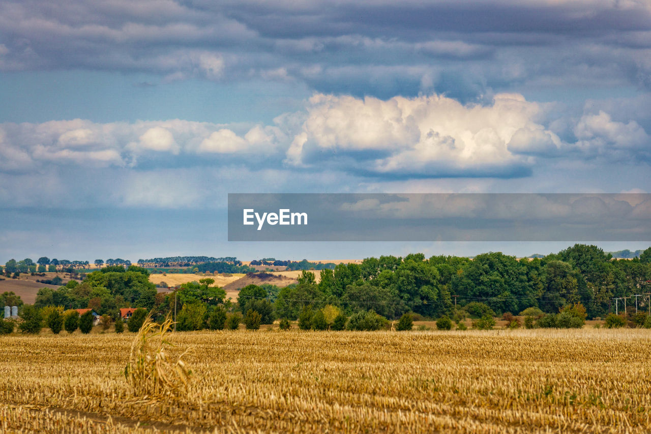 landscape, plant, sky, cloud - sky, environment, field, beauty in nature, tree, scenics - nature, tranquil scene, land, rural scene, growth, agriculture, tranquility, nature, day, no people, outdoors, crop, oat - crop