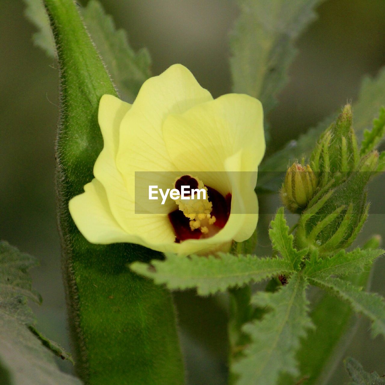 plant, flower, growth, flowering plant, beauty in nature, close-up, fragility, vulnerability, freshness, petal, plant part, inflorescence, flower head, nature, leaf, no people, day, green color, selective focus, focus on foreground, sepal