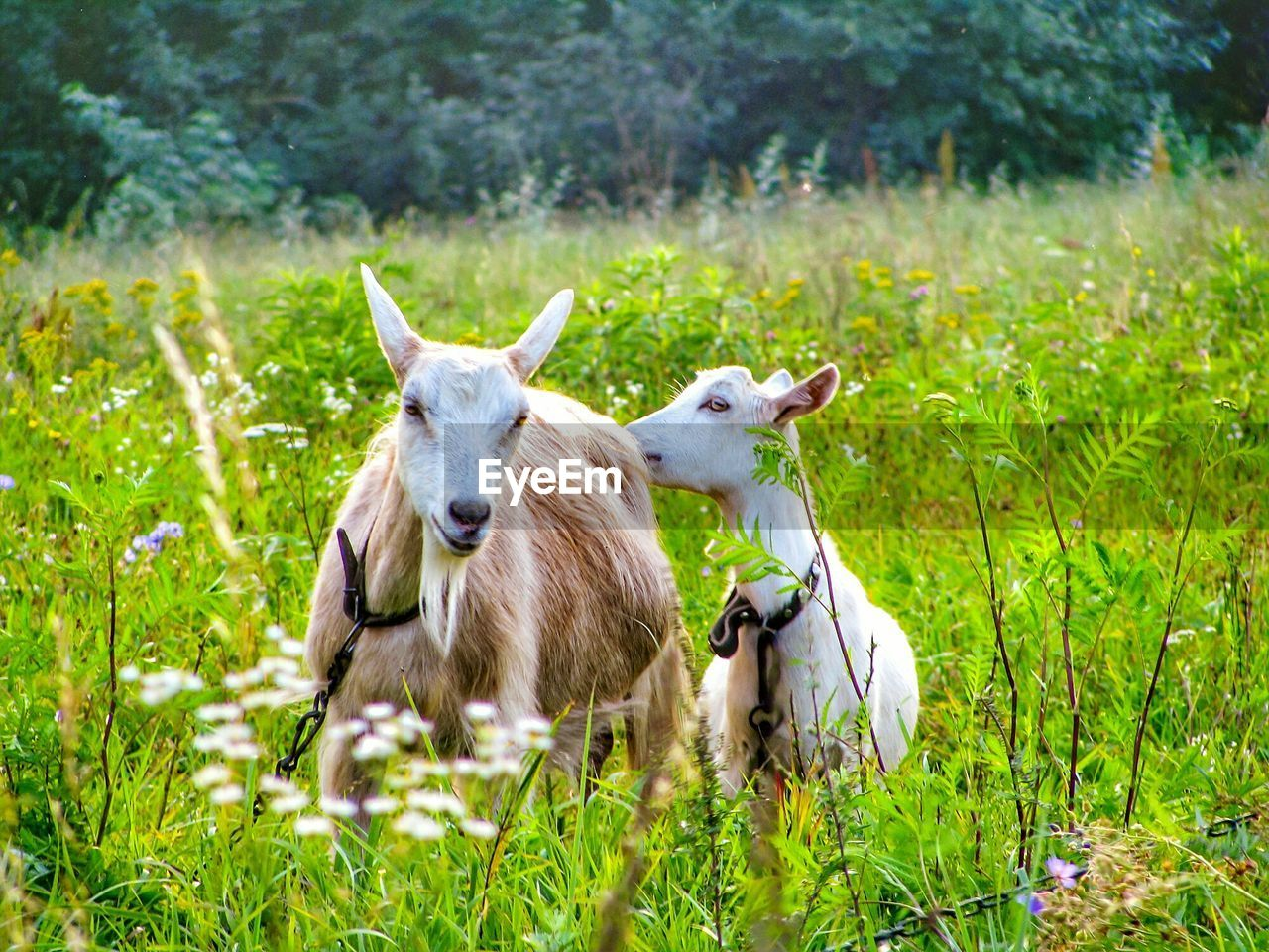 plant, animal, animal themes, grass, domestic, livestock, domestic animals, pets, mammal, vertebrate, land, field, green color, nature, group of animals, growth, day, no people, young animal, outdoors, herbivorous