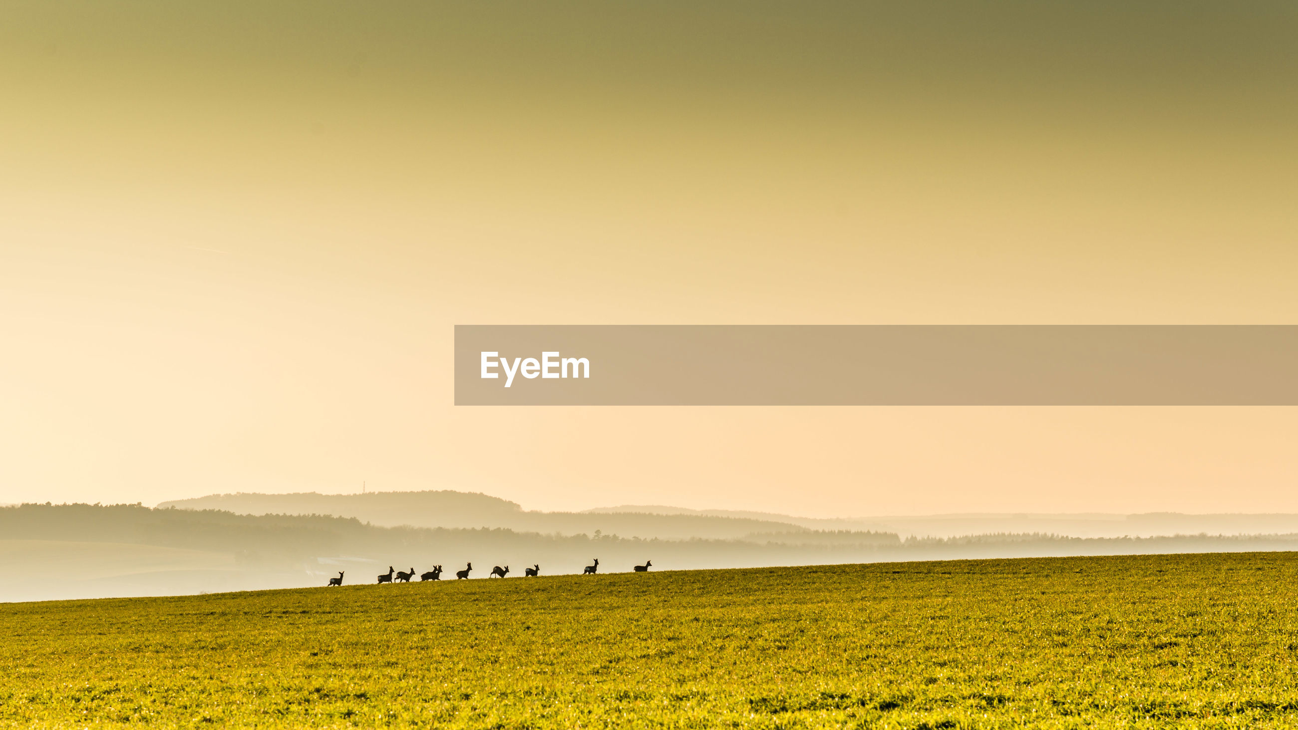 Scenic view of field with deer against sky