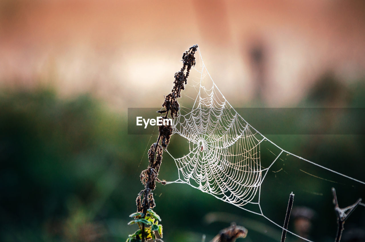 Close-Up Of Spider Web On Dried Plant
