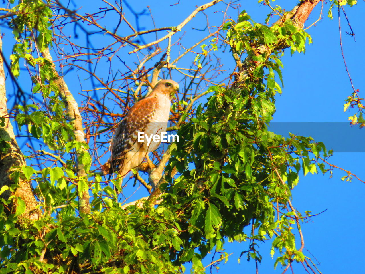 tree, low angle view, plant, bird, animal, animals in the wild, animal themes, branch, animal wildlife, one animal, vertebrate, sky, nature, no people, plant part, leaf, day, perching, blue, clear sky, outdoors
