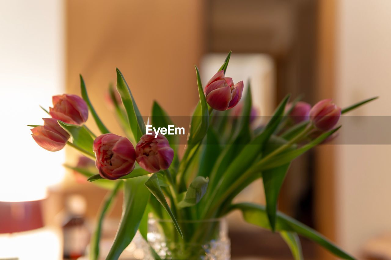 flower, flowering plant, plant, beauty in nature, freshness, vulnerability, fragility, petal, close-up, flower head, nature, focus on foreground, inflorescence, no people, pink color, tulip, growth, plant part, leaf, indoors, flower arrangement, purple, bouquet