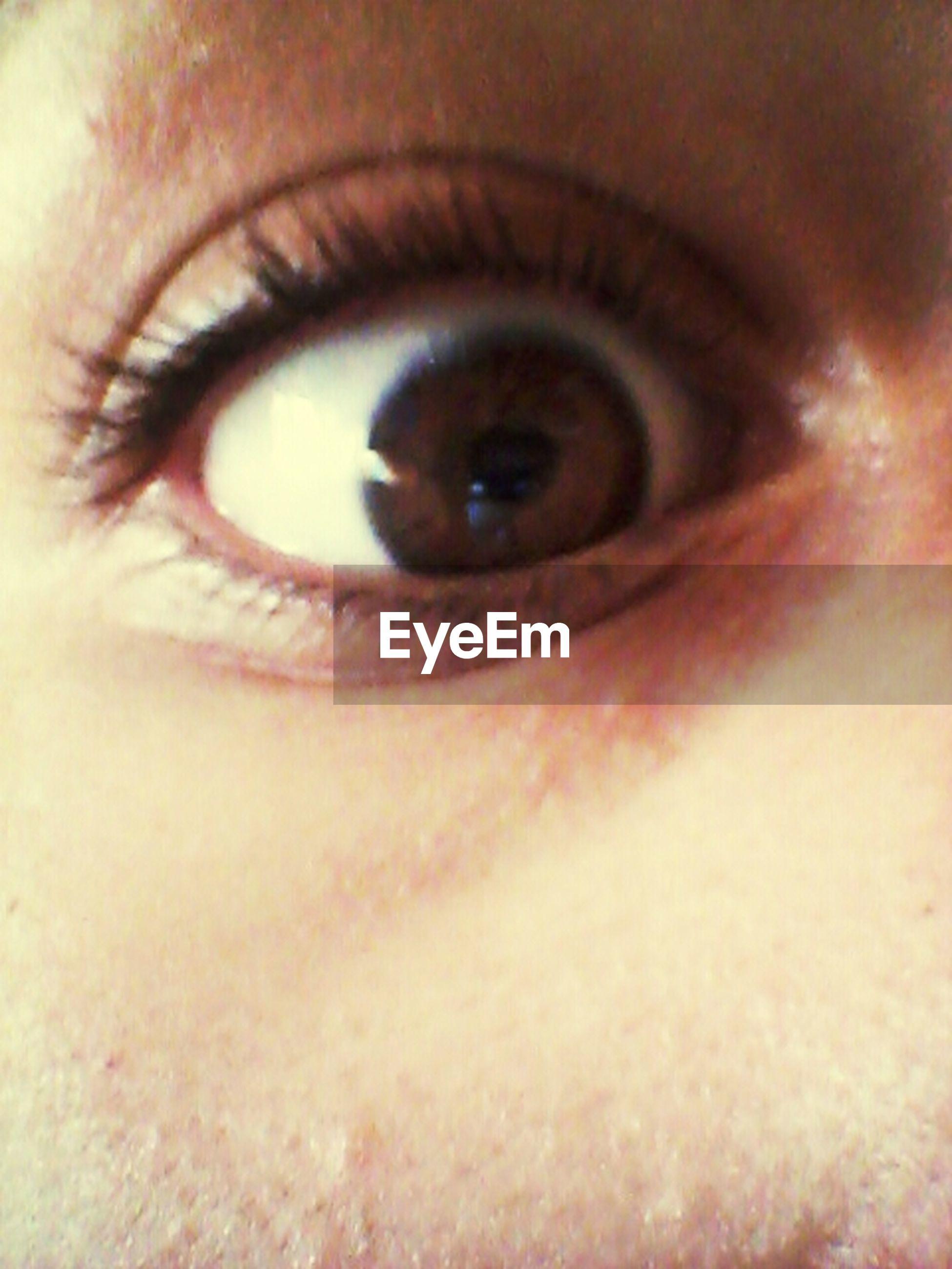 human eye, eyelash, close-up, looking at camera, portrait, eyesight, lifestyles, sensory perception, human face, human skin, part of, indoors, iris - eye, extreme close-up, headshot, eyeball, young adult