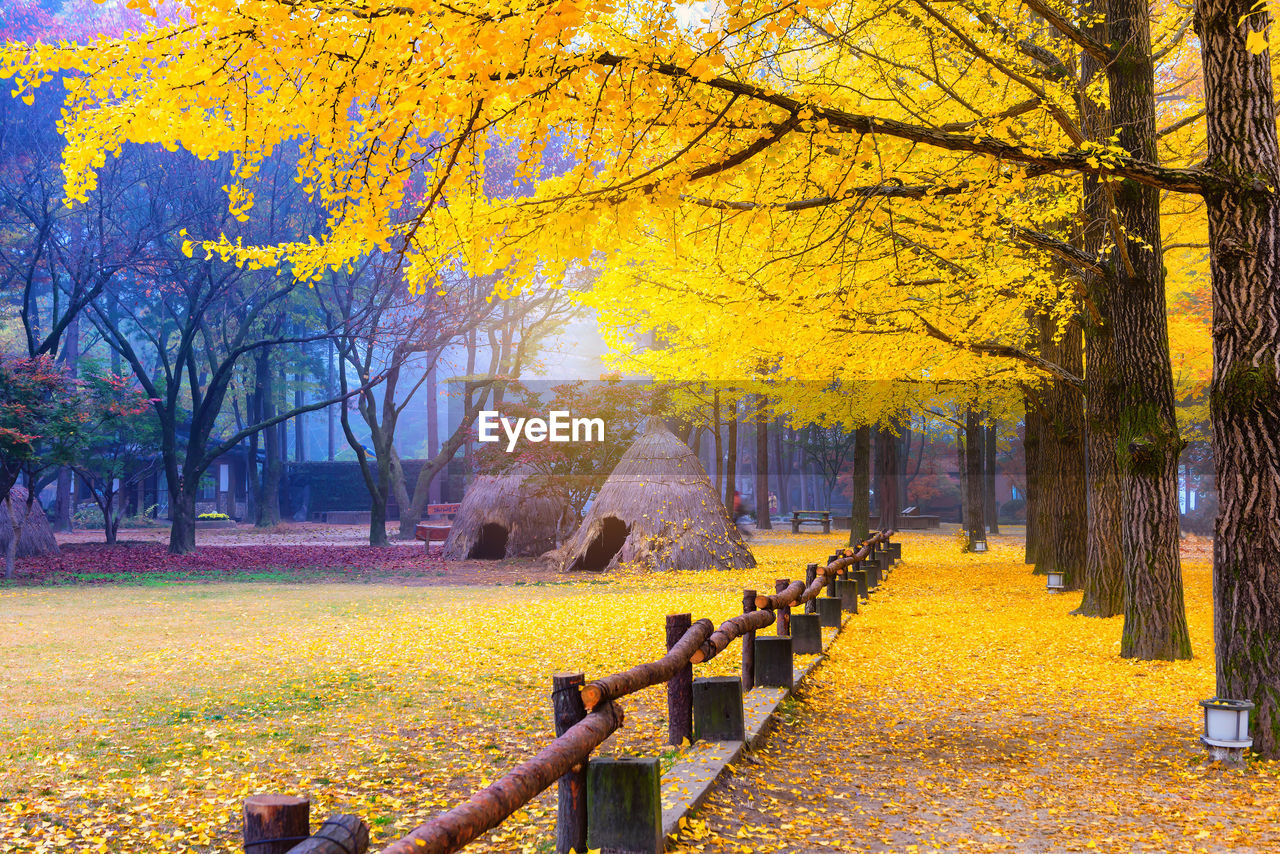 tree, plant, autumn, change, yellow, park, nature, beauty in nature, footpath, park - man made space, tranquility, tranquil scene, scenics - nature, no people, the way forward, leaf, day, branch, plant part, tree trunk, outdoors, autumn collection, treelined, park bench