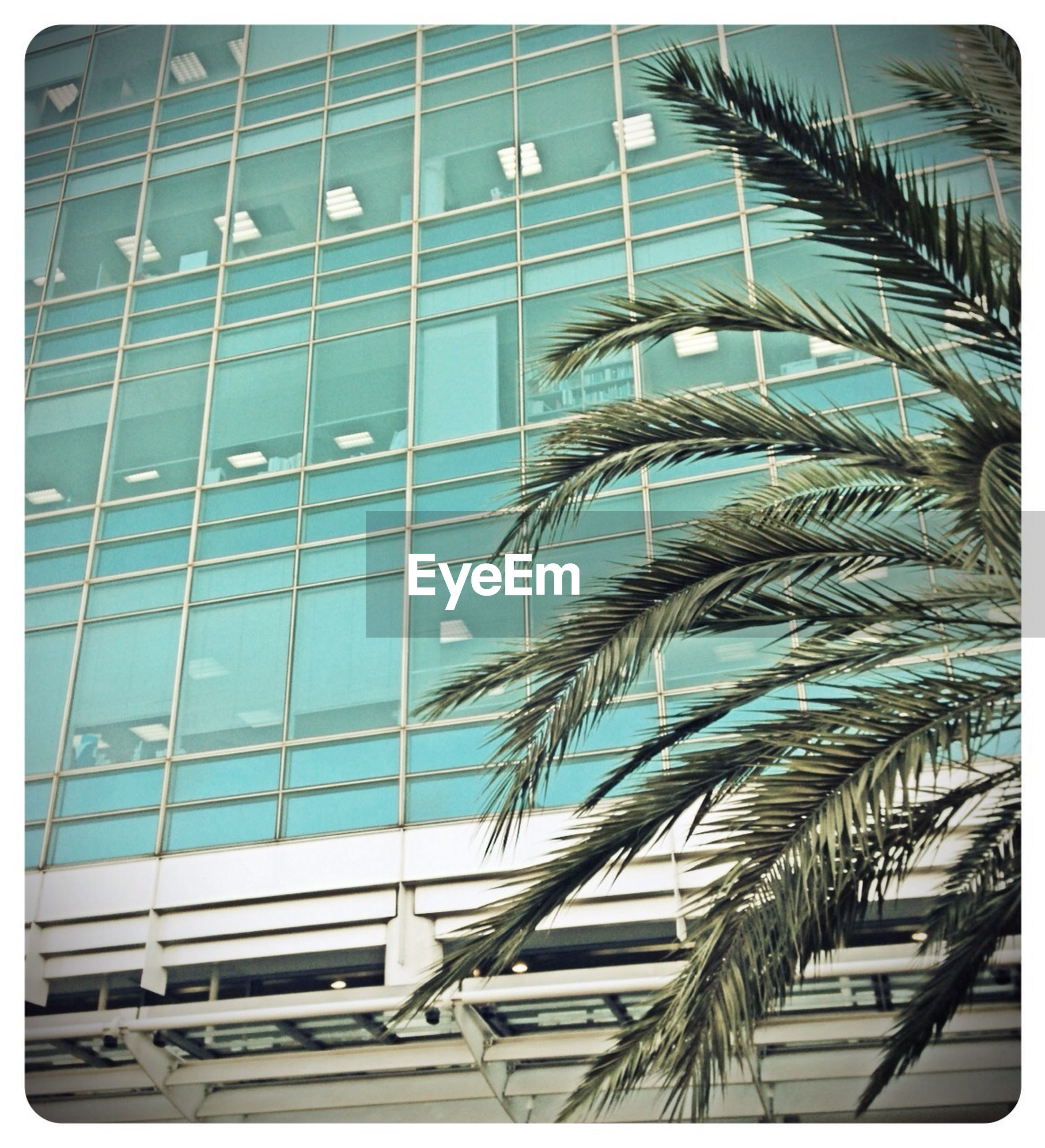 building exterior, low angle view, transfer print, architecture, built structure, glass - material, auto post production filter, reflection, building, city, modern, window, office building, day, blue, sky, palm tree, outdoors, no people, tall - high