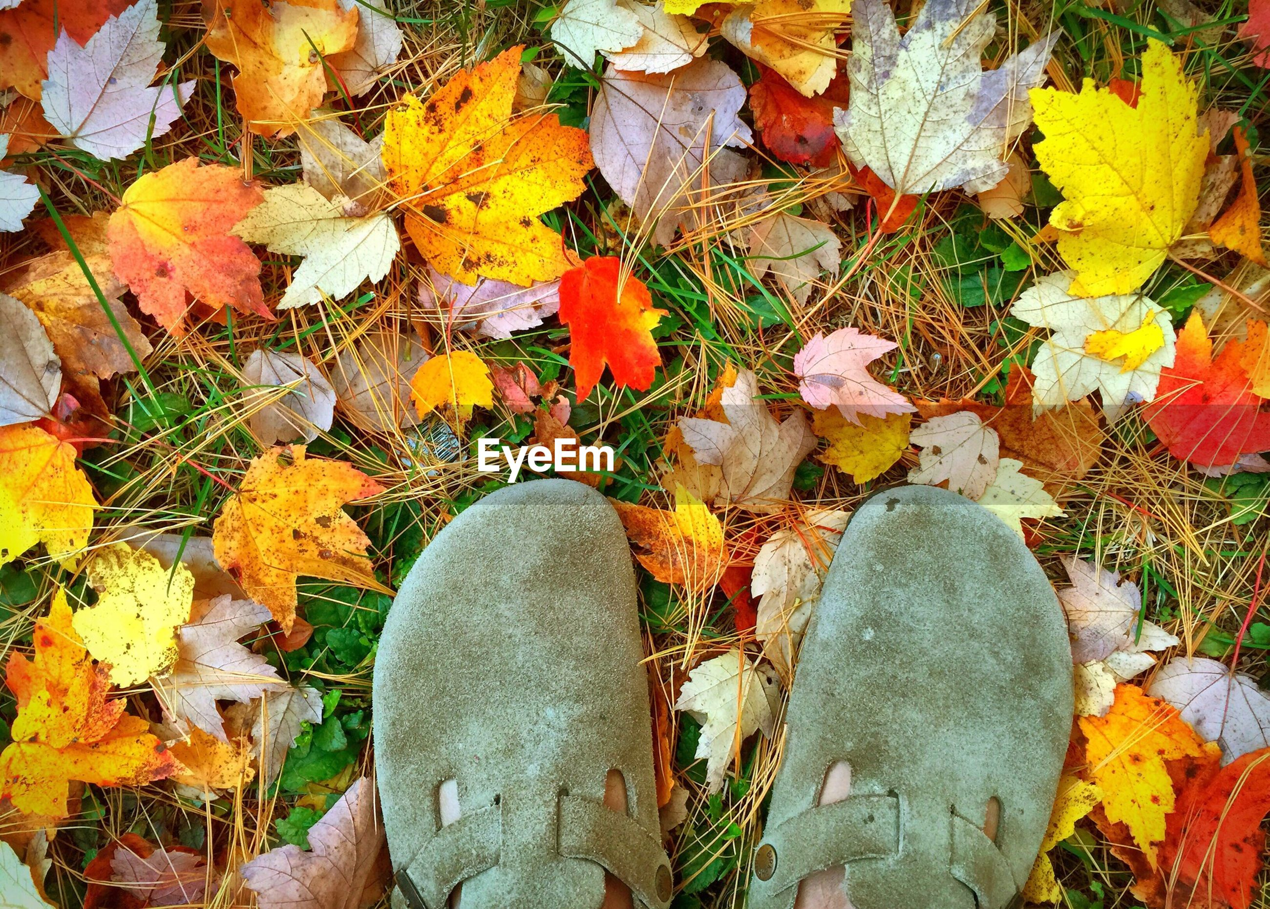 Low section of person standing on field with fallen leaves during autumn