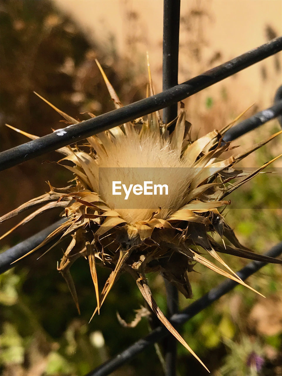 close-up, focus on foreground, plant, growth, nature, day, no people, beauty in nature, flower, selective focus, outdoors, fragility, freshness, vulnerability, flowering plant, invertebrate, land, plant stem, field, insect, softness, dandelion seed