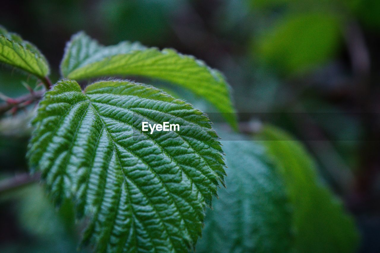 green color, leaf, plant, nature, close-up, day, selective focus, growth, focus on foreground, outdoors, beauty in nature, no people, fern, fragility, freshness