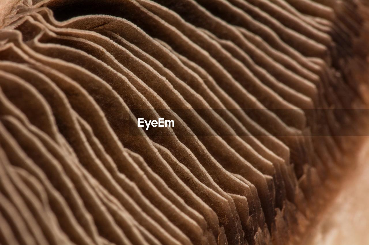 Cropped Image Of Mushroom