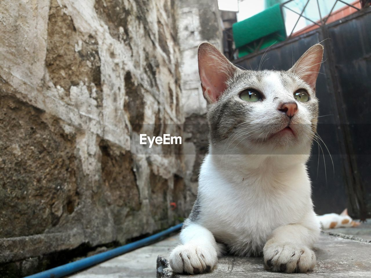 one animal, domestic cat, animal themes, pets, domestic animals, mammal, feline, whisker, day, no people, sitting, outdoors, close-up