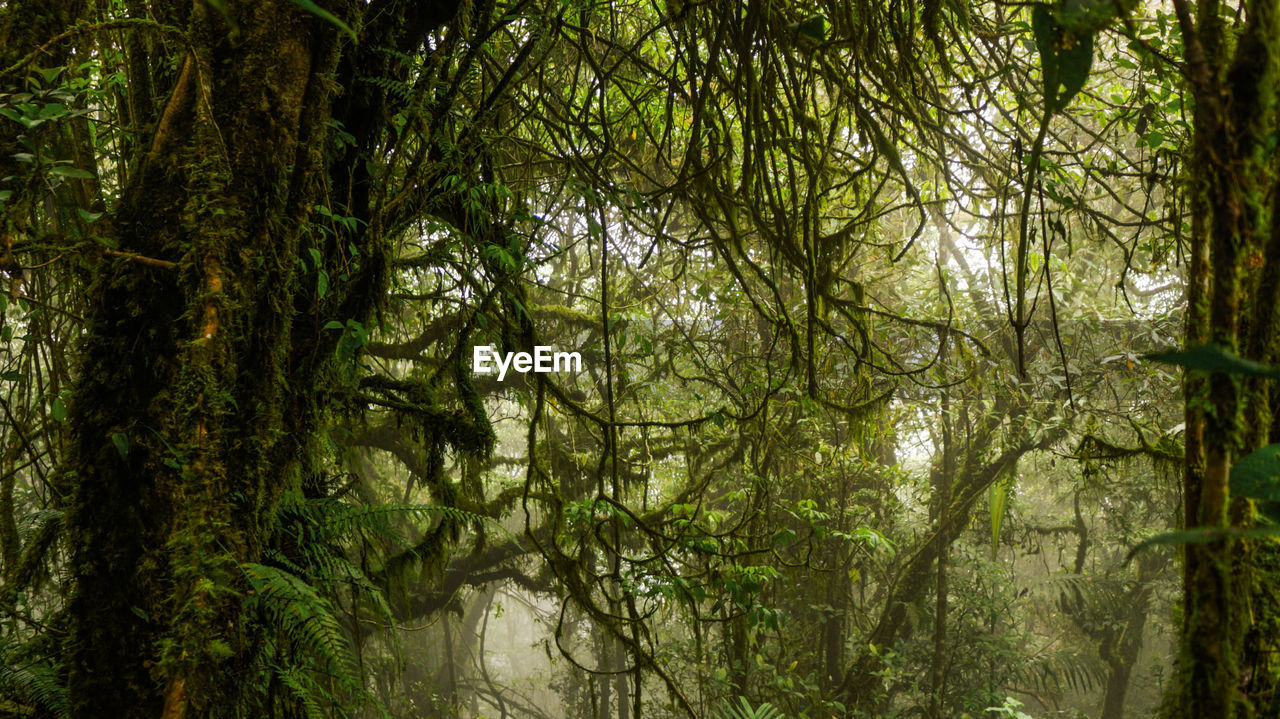 tree, plant, forest, tranquility, growth, beauty in nature, nature, no people, day, land, woodland, outdoors, branch, green color, water, lush foliage, foliage, tree trunk, scenics - nature, rainforest, tree canopy, bamboo - plant